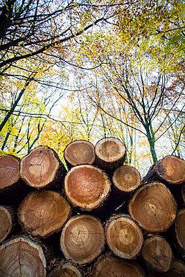 Cut trees piled up - p1057m1502852 by Stephen Shepherd