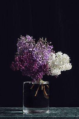 Lilacs in a glass vase - p1323m2280913 von Sarah Toure