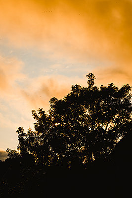 Tree at sunset - p1628m2212008 by Lorraine Fitch