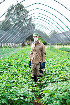 Farmer with protective mask in greenhouse with zucchini plants - p300m2198621 by 27exp