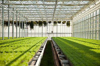 Greenhouse - p902m1031573 by Mölleken