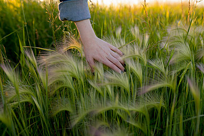 Woman's hand touching wheat - p1427m2136235 by Vyacheslav Chistyakov
