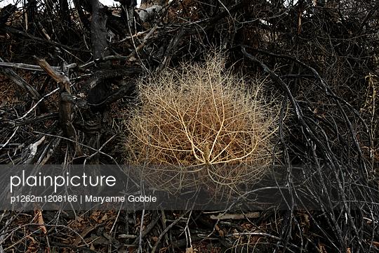 Tumbleweed - p1262m1208166 by Maryanne Gobble