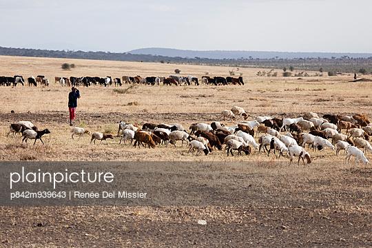 Flock of sheep in Serengeti - p842m939643 by Renée Del Missier