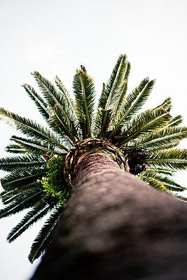 Palme in Barcelona - p795m2044803 von JanJasperKlein