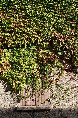 Zuwachsen - p9350028 von Konstanze