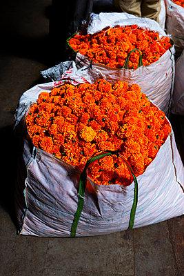 Blumenmarkt - p1271m2055335 von Maurice Kohl