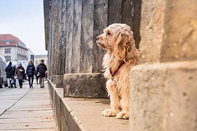 Hund in Hemsbünde in Niedersachsen - p299m1502639 von Silke Heyer
