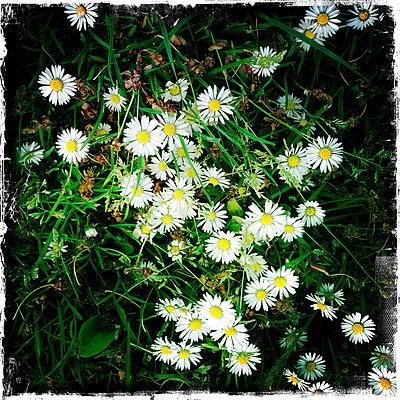 Blumen - p427m1072723 von R. Mohr