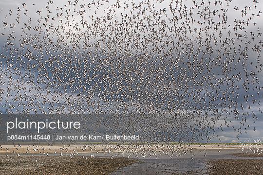 p884m1145448 von Jan van de Kam/ Buitenbeeld