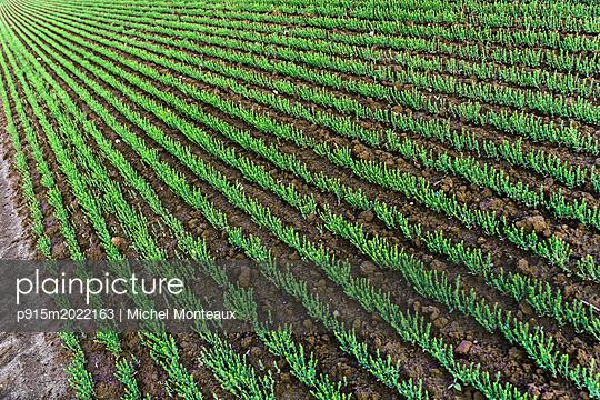 Flachsfeld - p915m2022163 von Michel Monteaux