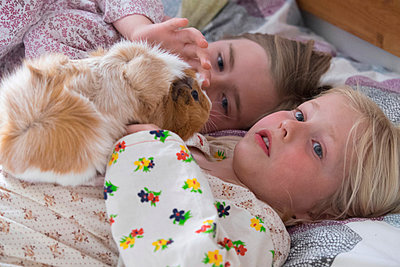 In bed with the guinea-pig - p522m944535 by Pauline Ruhl Saur