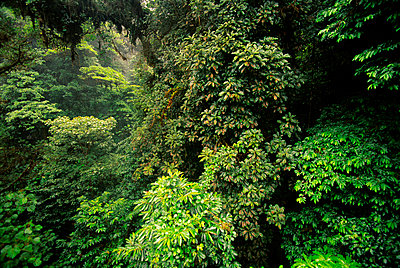 Rain forest canopy, Monteverde Cloud Forest Preserve, Costa Rica - p1100m875467 by Frans Lanting