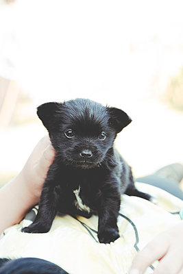 Black puppy with a tender look in its eyes - p1166m2269532 by Cavan Images