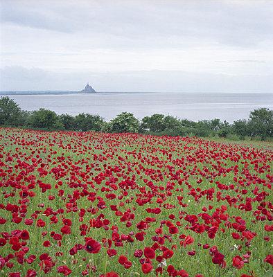 Mont St. Michel - p342m729082 by Thorsten Marquardt