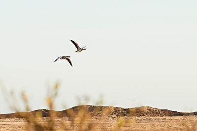 Two migratory birds - p1203m1582522 by Bernd Schumacher