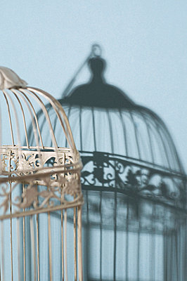 Vintage cage and its shadow - p564m1056228 by Dona