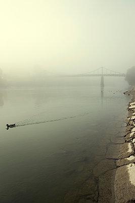 Ente schwimmt vor Brücke - p1443m1503269 von SIMON SPITZNAGEL
