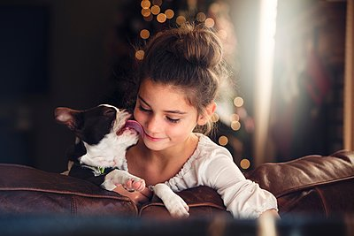 Boston terrier licking girls face on sofa in front of christmas tree - p429m1105635 by Rebecca Nelson