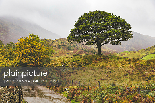 United Kingdom, England, Cumbria, Lake District,  lone tree in the countryside - p300m2013214 by William Perugini
