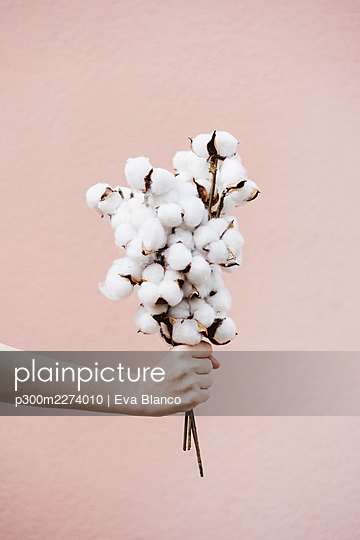 Woman holding bunch of cotton plant in front of pink wall - p300m2274010 by Eva Blanco