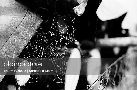 Spinnennetz mit Morgentau - p627m1035823 von Samantha Dietmar