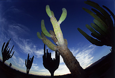 Desert Landscape - p3430799 by Richard Hallman