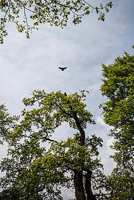 Vogel - p403m901478 von Helge Sauber