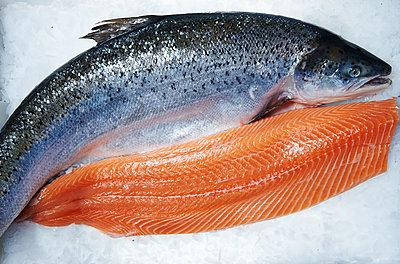 Frozen salmon - p961m1591137 by Mario Monaco
