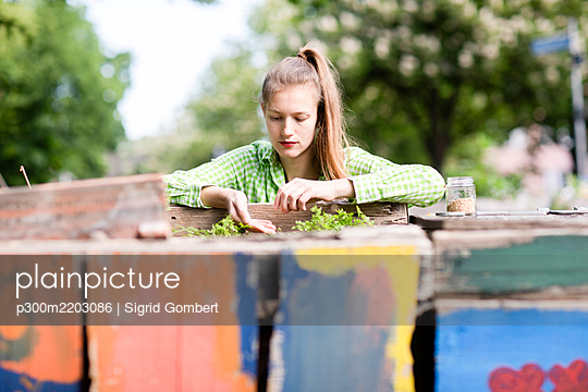 Young woman planting seedlings in urban garden - p300m2203086 by Sigrid Gombert