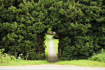 Pathway through arch in hedge - p3015177f by Benne Ochs
