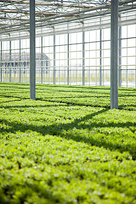 Greenhouse - p902m1031570 by Mölleken