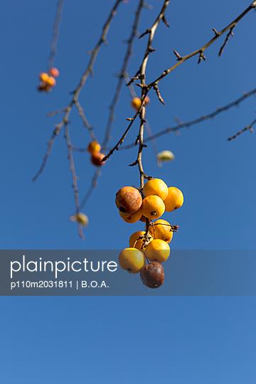 Gelbe Äpfel - p110m2031811 von B.O.A.