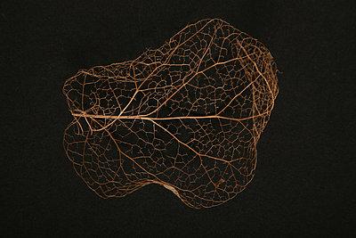Physalis - p165m881006 by Andrea Schoenrock