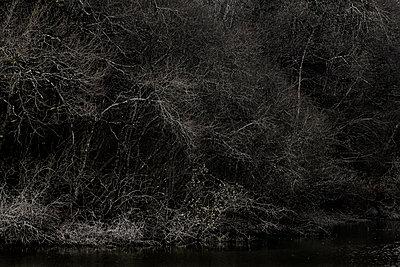 Kahle Bäume am Flussufer - p910m1195591 von Philippe Lesprit