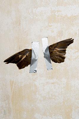 Festgeklebte Flügel - p451m1214876 von Anja Weber-Decker
