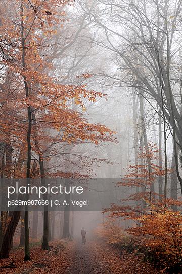 Herbstwald im Nebel - p629m987668 von C. A. Vogel