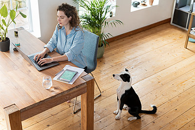 Dog looking at female entrepreneur working on laptop at home office - p300m2276460 by Steve Brookland
