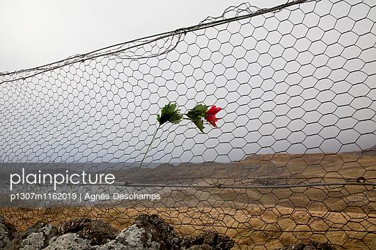 p1307m1162019 von Agnès Deschamps