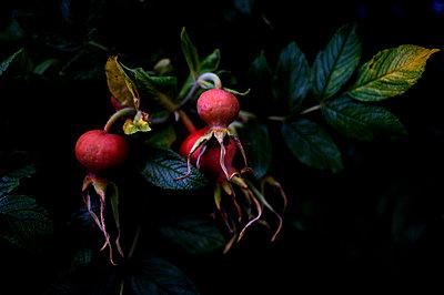 Rote Früchte - p1088m1207343 von Martin Benner