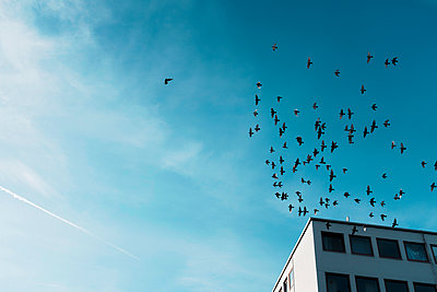 Vögel, Himmel, Gebäude - p1340m2057811 von Christoph Lodewick