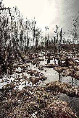 Sumpfgebiet mit abgestorbenen Bäumen - p253m813556 von Oscar