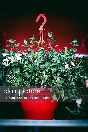 Blumentopf zum Aufhängen - p1149m1152286 von Yvonne Röder