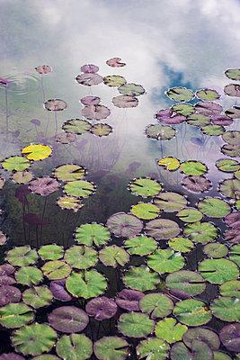 Lily pond  - p1657m2284952 by Kornelia Rumberg