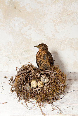 Bird's nest - p451m916277 by Anja Weber-Decker