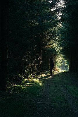 Waldweg - p1398m2204089 von Tabitha Genoveva Harter