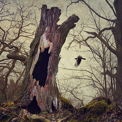 Black Winged Messenger Part XVI - p1633m2210038 by Bernd Webler