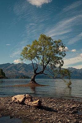 Wanaka Tree in Neuseeland - p470m2082297 von Ingrid Michel