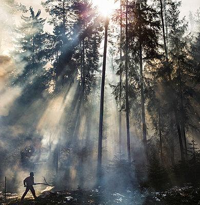 Waldarbeiter - p966m780950 von Tobias Leipnitz