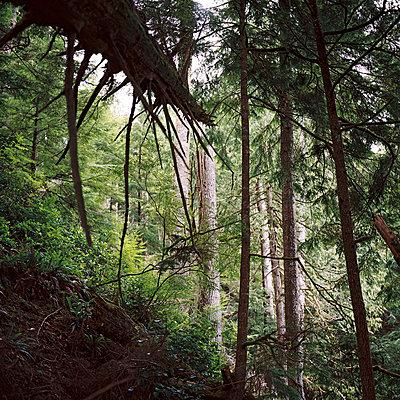 Wald - p1195m1028204 von Kathrin Brunnhofer